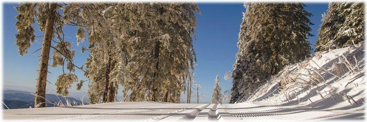 Wann wird's mal wieder richtig Winter? Ein Winter wie er früher …?