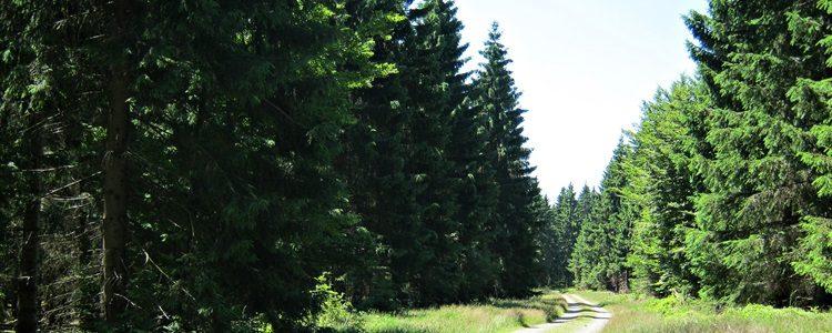 Ruhe am Rennsteig im Thüringer Wald!